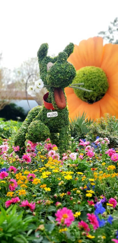 topiary of pluto with flowers in his mouth in front of a giant orange flower