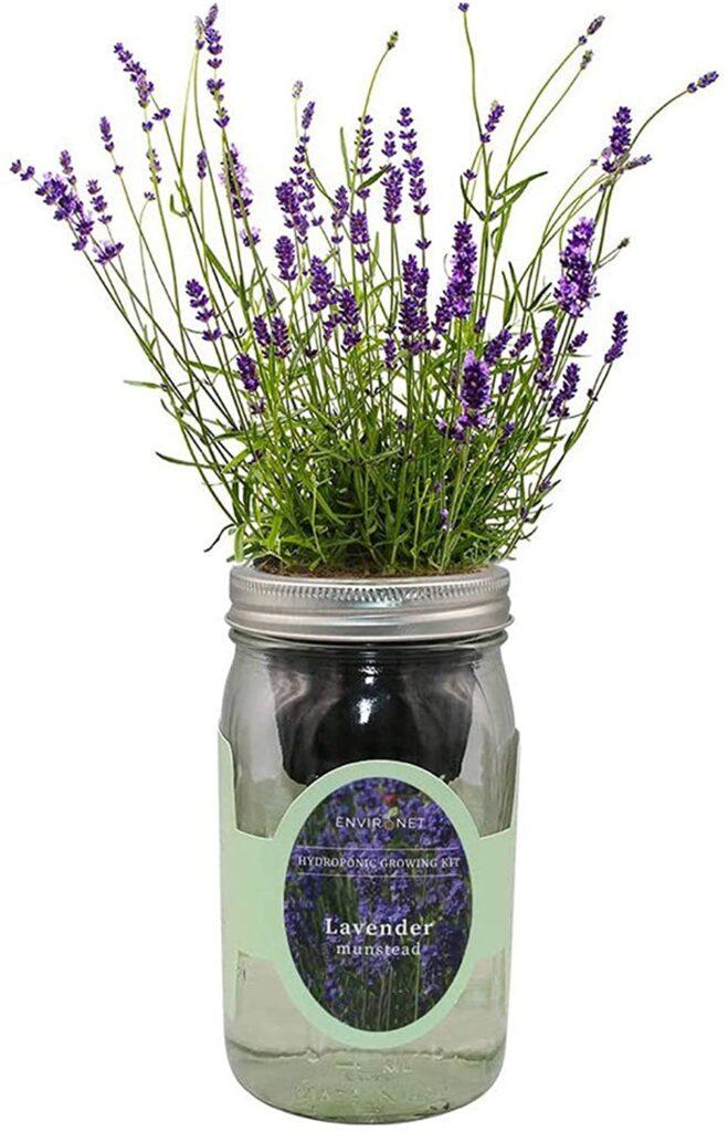 mason jar with lavendar inside