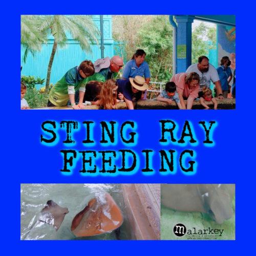 STING RAY FEEDING
